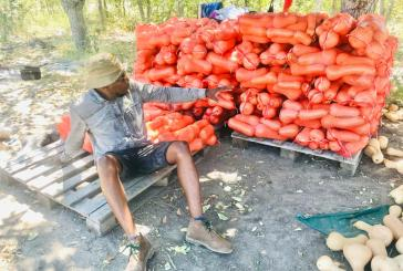 More youths venture into agriculture