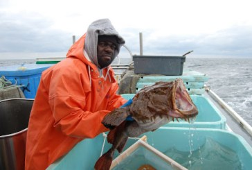 Monkfish quota up for auction