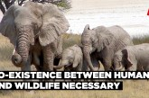 Co-existence between human and wildlifenecessary