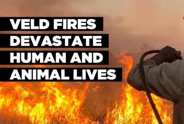 Veld fires devastate human and animal lives