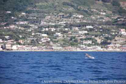 Tursiope - Oceanomare Delphis Onlus