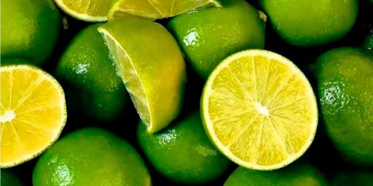 Plaga ocasionaría que precio de limón supere el alcanzado con Fenómeno El Niño