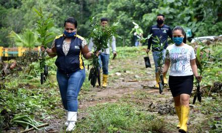 Jornada de reforestación en la parroquia Plan Piloto