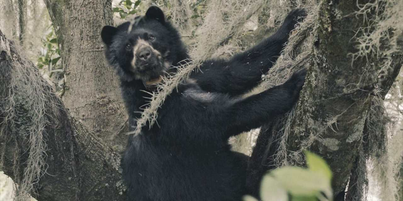 Un documental refleja la belleza del geoparque mundial Imbabura