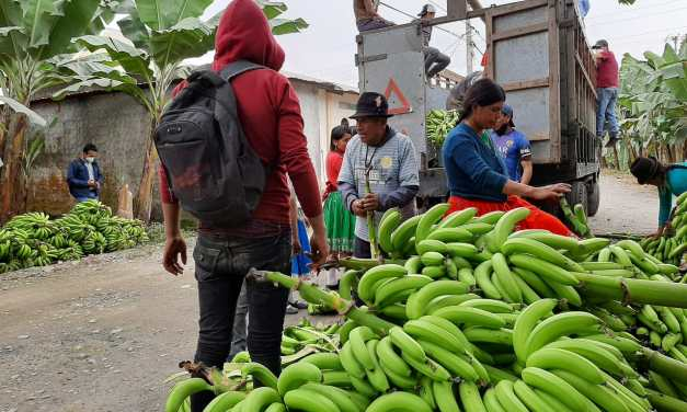 MAG envía banano y ensilaje a zonas afectadas por la caída de ceniza del Sangay