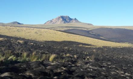 Incendio en la Reserva Ecológica Antisana afectó 470 hectáreas y especies de vida silvestre