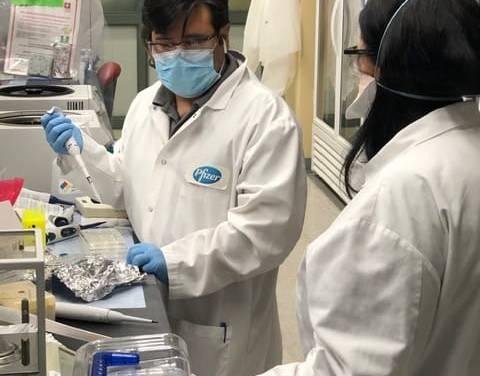 Pfizer y BioNTech dotarán a Ecuador su vacuna candidata contra el SARS-CoV-2