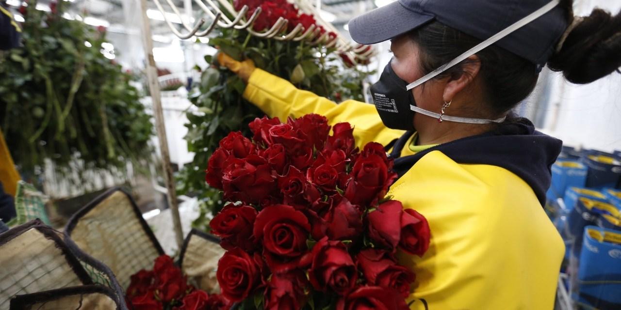 Las rosas ecuatorianas ingresan a los Estados Unidos con 0 % de arancel