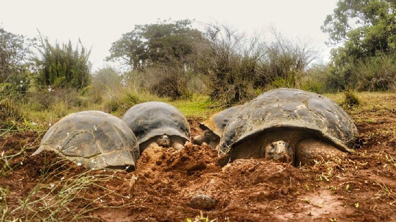 Expedición científica monitoreará la población de tortugas gigantes en la isla Isabela