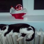 pisica-ce-doarme-pe-calorifer