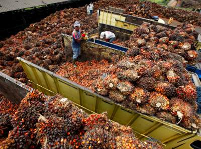 palm oil producer