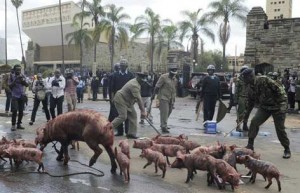 Kenya greedy pig protest