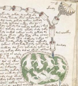 Voynich-manuscript-550x605