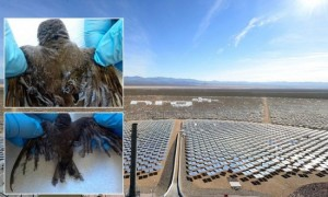 Ivanpah-solar-energy-550x330