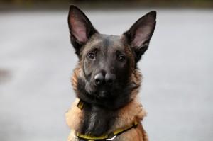 Snuffles-the-Dog-3121113