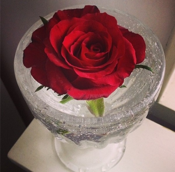 red_rose_094