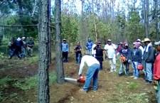 Daña gusano descortezador 70% de bosques en la Mixteca