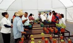 Inauguran vivero comunitario en Asunción Cuyotepeji