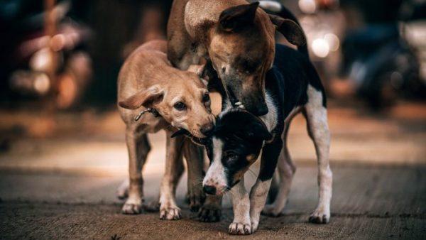 Exigen al Congreso reconocer a animales como seres sintientes