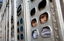 Migrantes angustiados y con niños toman camión para pollos en su viaje hacia Guadalajara
