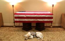 Muerte de George HW Bush: la conmovedora imagen de Sully, el perro del expresidente tendido al lado de su féretro
