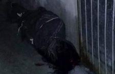 Ocurren dos feminicidiosenVeracruz; matan a una embarazada en Xalapa, y a menor en Orizaba