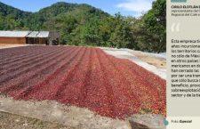"""Cafetaleros alertan que planta de Nestlé los volverá """"peones de hacienda"""" y destruirá su tierra"""