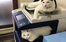 Compañía japonesa adopta gatos rescatados para reducir el estrés laboral