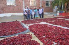 #Reportaje Salsas elaboradas por mujeres mixtecas, conquistan paladares en el norte y centro del país | Informativo 6y7