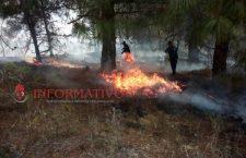 #InfoAhora Sofocan incendio en Mesones Hidalgo; se calcina vegetación en La Reforma | Informativo 6y7