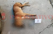 Matan a 20 perros en Putla, presuntamentefueron envenenados; la Vicefiscalía inició una carpeta de investigación | Informativo 6 y 7