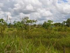 Mulher é estuprada e marido é amarrado em matagal durante assalto