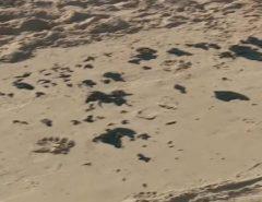 Óleo nas praias do NE: é petróleo e não é brasileiro