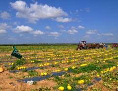 Fruticultura potiguar conquista mercado chinês e deve gerar 10 mil empregos