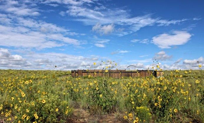 CEOLP_Site-summer-sunflowers