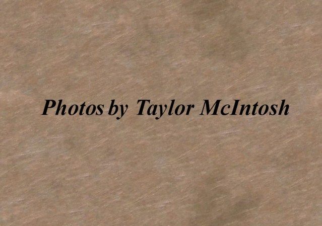 Photo-by-Taylor-McIntosh