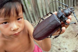 The Titan Longhorn Beetle