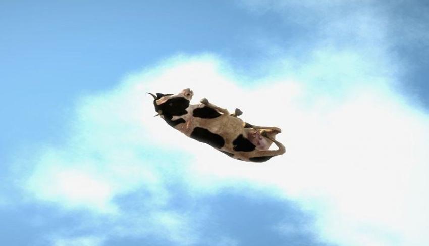 Resultado de imagen para imagenes lluvia de vacas