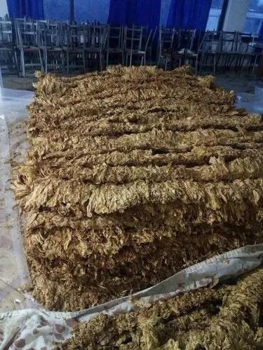 Elbasan/ Banorët e Fushës së Dumresë ankohen për çmimet e ulta të duhanit dhe se firma ka dy vite që nuk ka kryer pagesa
