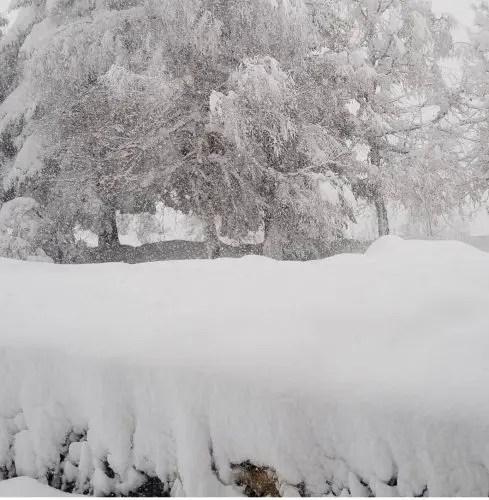 Dardha nën dëborë …