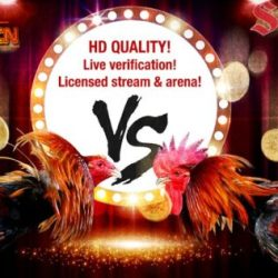 Agen S128.net Sabung Ayam Live Streaming