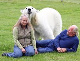 Binatang peliharaan beruang