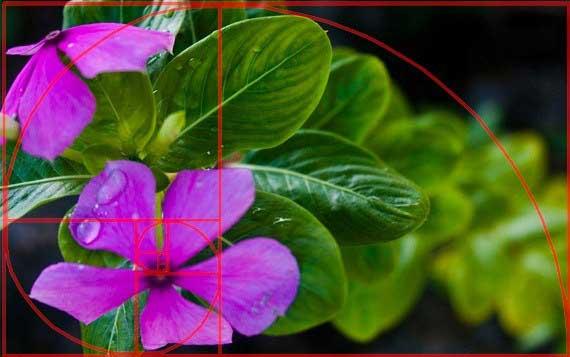 aplikasi golden rectangle ketika mengedit gambar