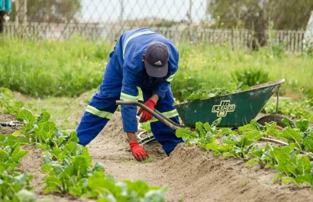 keluarkan peluh bersenam berkebun
