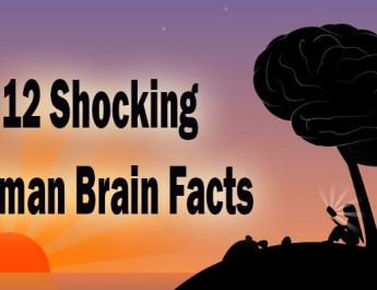 Human Brain facts