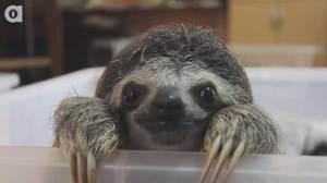 sloth-selfie