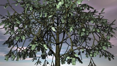Photo of The Money Tree: A Social Experiment