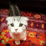Top Five Famous Pets on Twitter 4