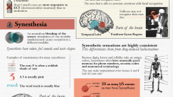 5 Strangest Mental Disorders [Infographic] 7