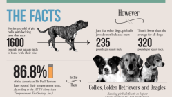 The Truth about Pit Bulls [Infographic] 9